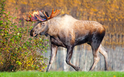 Pemi Valley Excursions Moose Tours and Moose Shops